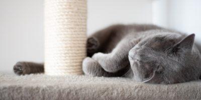 indestructible cat scratching post