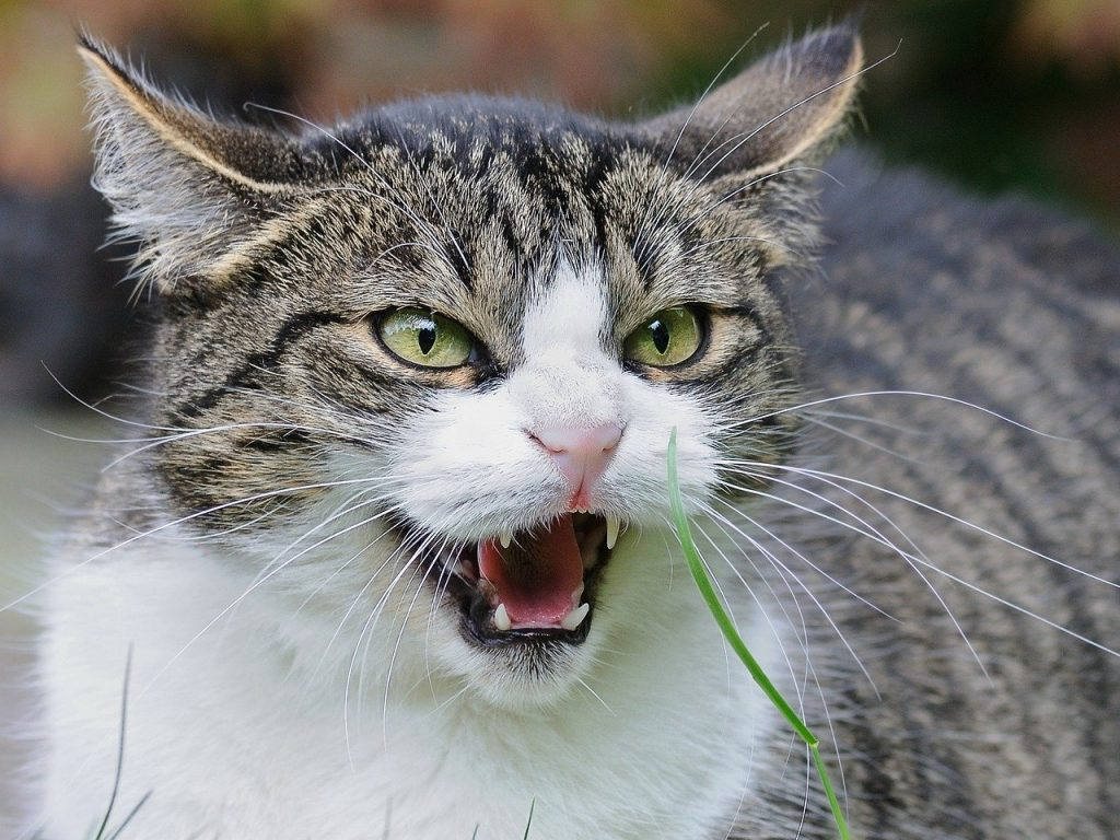how to calm down an aggressive cat