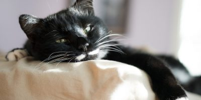 best cat beds for older cats