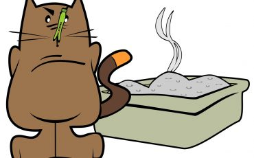 how to stop litter box odor
