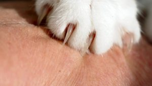 what to do if your cat scratches you