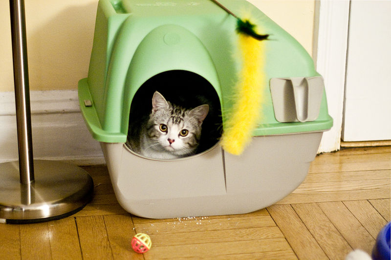 Litter Boxes That Look Like Furniture