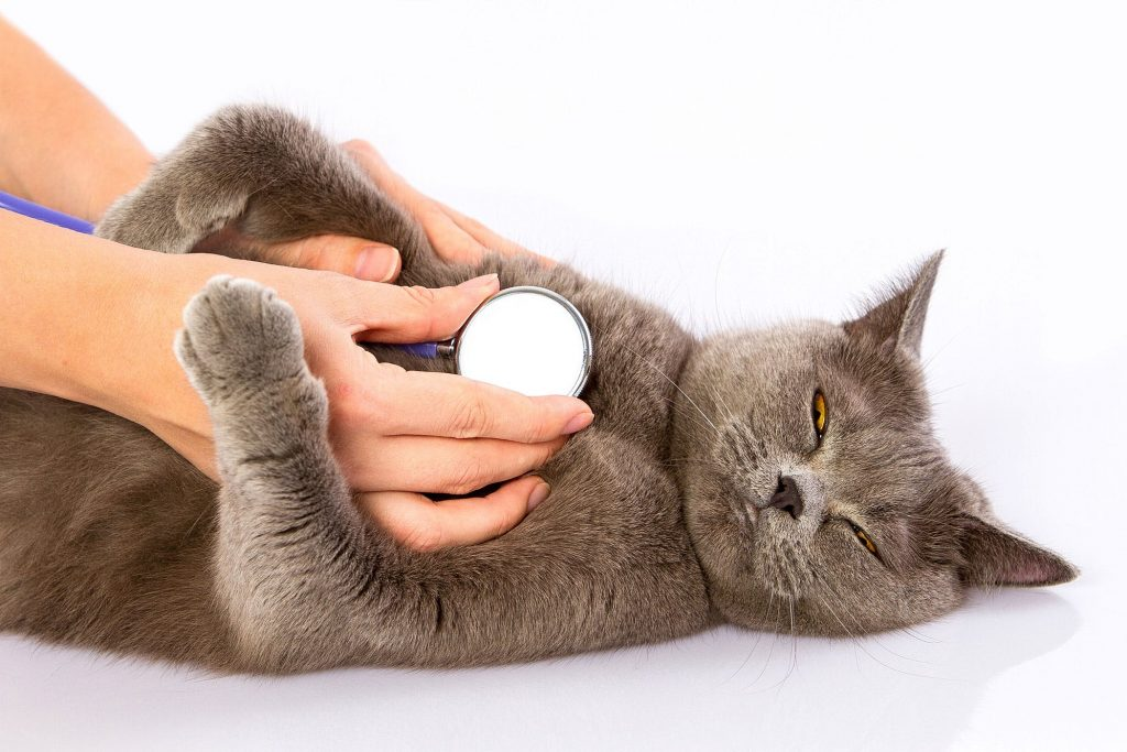 symptoms of carbon monoxide poisoning in cats