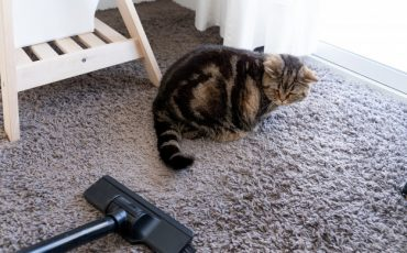 best stick vacuum for cat litter