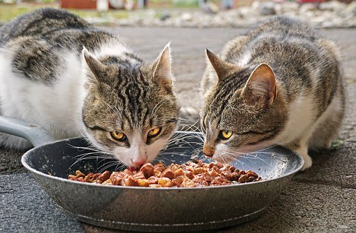 food bowls for cats that eat too fast