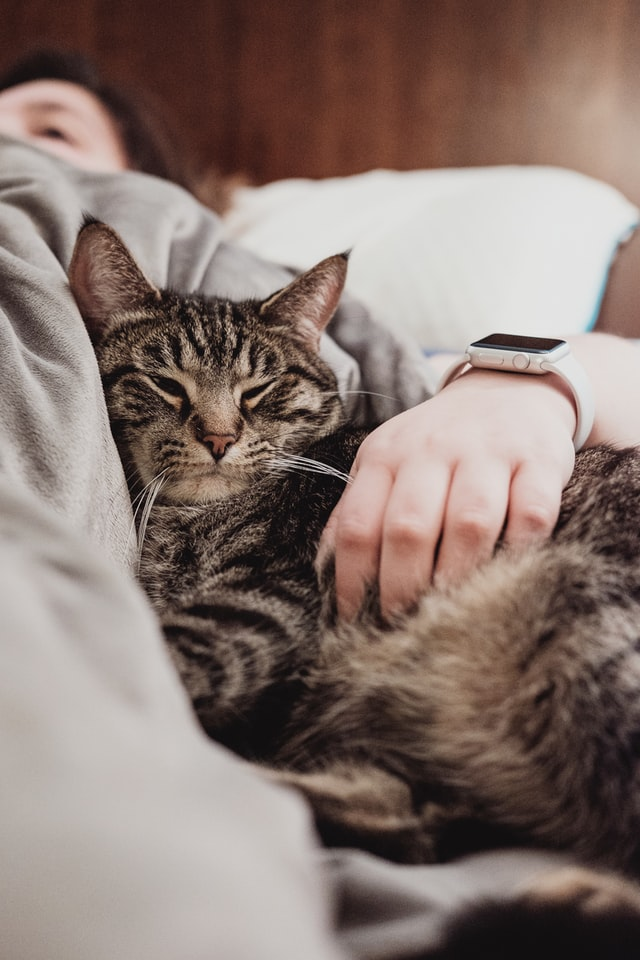 why do cats kneads with their front paws