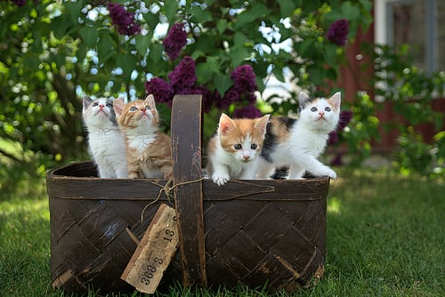why do mother cats abandon their kittens