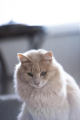 Flea Treatment For Nursing Cats
