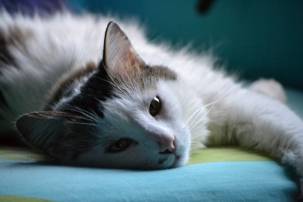 are heating pads safe for cats