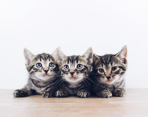 mother cat not producing milk