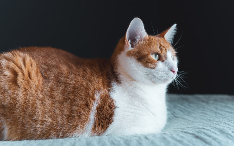 Flea Treatment For Nursing Cats
