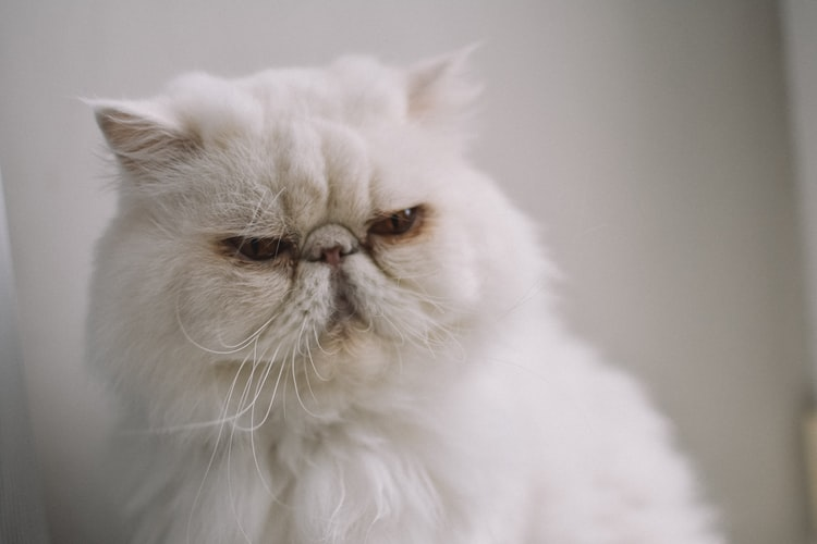 Best Cat Food for Long Haired Cats