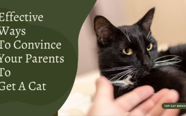 How To Convince Your Parents To Get A Cat